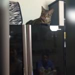 冷蔵庫の扉を閉じようとすると何故か荒ぶる奇妙な猫