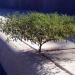 過酷な環境で逞しく生きる生命力あふれる木々の写真集 25枚
