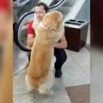 エスカレーターが怖くて飼い主に抱っこされる小心なワンコがカワイイ!
