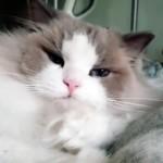 あるモノを使うと一瞬で眠りに落ちてしまう猫