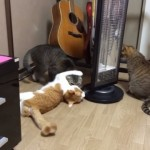 これは何かの儀式か(笑)!?・・・とある猫たちの奇妙な行動を捉えた動画