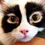 個性あふれるユニークな模様を持つ猫たちの写真 24選