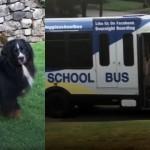 スクールバスが到着すると大興奮するワンコ。果たしてそのワケは?