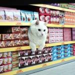 出演者はすべて猫!?・・・ドイツのスーパーマーケットのCMが面白い!