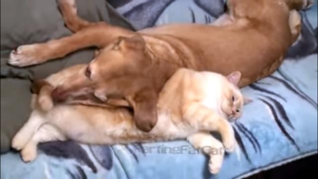 これは堪らん(笑)!?・・・猫のオナラを至近距離で喰らった犬の反応