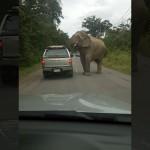 強引な方法で車の中から食べ物を奪うゾウの驚愕の映像!