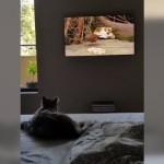 高画質テレビの画面に映る鳥を捕まえようとテレビに飛びつく猫(笑)