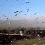 大量発生した巨大ワタリバッタの群れを捉えた凄まじい映像