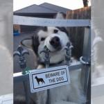 「猛犬注意」の看板に偽りあり!?・・・人懐っこそうなワンコたち 21選