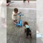 幼児が遊んでいる電動スクーターを奪い取って走り去る意地悪なプードル