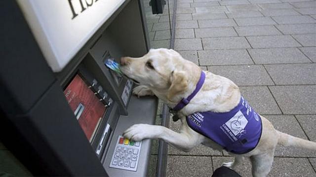 これなら安心!?・・・ATMを利用する飼い主の背後をガードする頼もしい犬たち 13枚