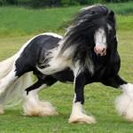 神話に登場する馬のように長いたてがみとテールを持ったジプシーバナーの写真 16枚
