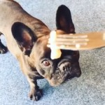【閲覧注意】世界一臭い「シュールストレミング」のニオイを嗅いだ犬の反応