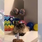誕生日を祝ってパーティーを開いてもらった猫のまさかの反応(笑)