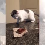チョコドーナツを怖がる猫