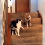 猫パンチをお見舞いしたつもりが、間違って犬のターボボタンを押してしまった猫(笑)