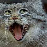 写真写りの悪さに思わず笑ってしまう動物たちの写真いろいろ 20選