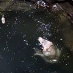 井戸に落ちて今にも溺れそうな犬 → レスキュー隊員が近寄ると…