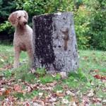 切り株を利用して犬の視界から巧みに姿を隠すリスがおもしろい!