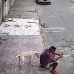 犬にオシッコを掛けられ蹴り上げようとした男性がネットで炎上!? そして予想外の展開に