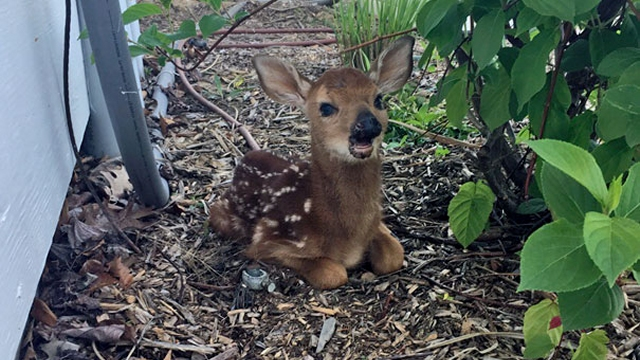こんにちは!と挨拶にやって来た予期せぬかわいい動物たちの写真 21枚