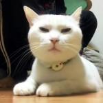 普段の猫とブラッシング中の猫の表情にギャップがあり過ぎておもしろい!