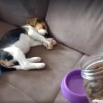 ご飯を入れる音を聞いた瞬間、睡眠モードから食事モードに突入するテンションの高い子犬(笑)