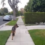 散歩の途中、飼い主が居なくなったときの愛犬の反応が愛おしすぎる