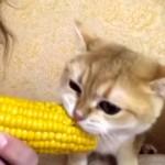 1本のトウモロコシを仲良く分け合う女性と子猫が微笑ましい!