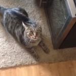 ニオイを嗅いだだけで怒り狂うほど、近所の野良猫が大嫌いな飼猫