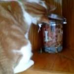 苦労してビンからクッキーをゲットした猫 → まさかの不運が訪れる