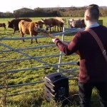 ベースソロを牛たちに聴かせる男性ミュージシャン。果たして牛の反応は・・・