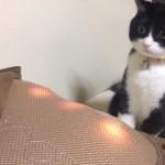 思てたんと違う!?・・・マッサージ器を見せられて固まってしまった猫(笑)