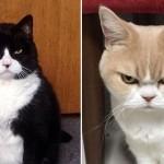 誰にだって気分の優れない時もある・・・不機嫌な表情をした猫たちの写真 17枚