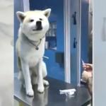 動物病院の診察台でワンちゃんのとった意外な行動に驚き!