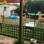 庭でアルパカと楽しそうに追いかけっこをする男性♪