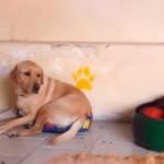 小型犬にベッドを奪われて文句も言えない小心な大型犬が切なすぎ!