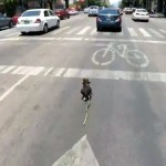 交通量の多い道路を全力で逃走する愛犬を自転車で追う飼い主とのチェイスにハラハラどきどき!