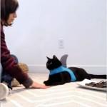 飼い主にとられまいと、クッキーの入ったプレートを守る猫