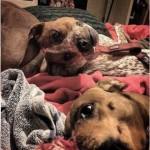 うちの愛犬はこんなに酷く顔が歪んでたっけ!?・・・ 思わず二度見してしまう写真