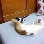 育児を任せられないパパ猫に監視の目を光らせるママ猫