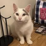 部屋の何処かに隠れている猫を探し出す「猫探しクイズ」 19問