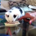 誰にもあげない!触らせない!・・・食べ物を死守する独占欲の強い子猫