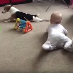 赤ちゃんにハイハイの仕方を教示するワンちゃん