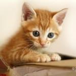 娘から子猫を預った父親。子猫の様子が心配な娘に要求され、一枚の写真を送ることに