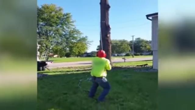 木の枝を伐採中にミスを犯してとんだアクロバットを演じてしまった作業員