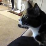 冷蔵庫の扉を開けるとまっしぐらに台所へ駆けつける猫 → 果たしてその目的は?