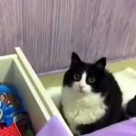 キャンディーが欲しくてつぶらな瞳で飼い主を見つめる猫が可愛すぎ!