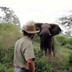 象が襲い掛かってきたときの生き延びるための対処法が怖すぎる!