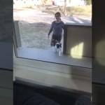 散歩から帰宅した猫 → 家に入ろうとしてまさかの大失敗!